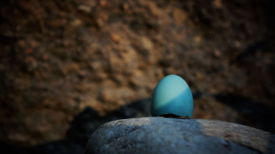 Blue egg Found Object Nature Animal Themes Bird Egg Blue Close-up Day Egg Fragile Nature No People Outdoors Rock - Object Textured  A New Beginning