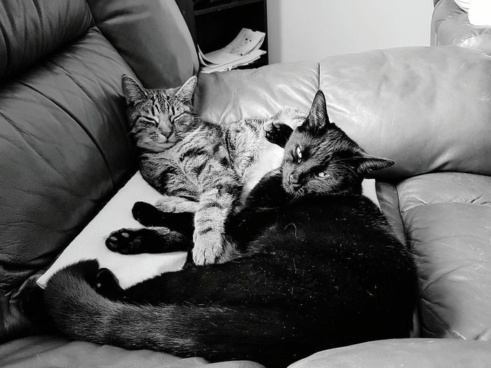High angle view of cats resting on sofa