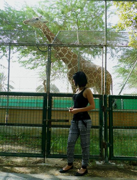 Giraffe♥