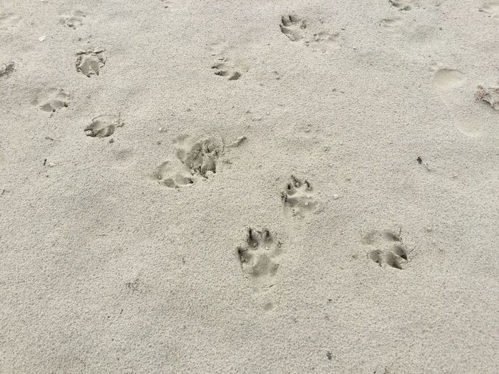 Beach FootPrint Paw Print Walk On The Beach  Dogs Tranquil Scene Taking Pictures No People Sand Sand & Sea