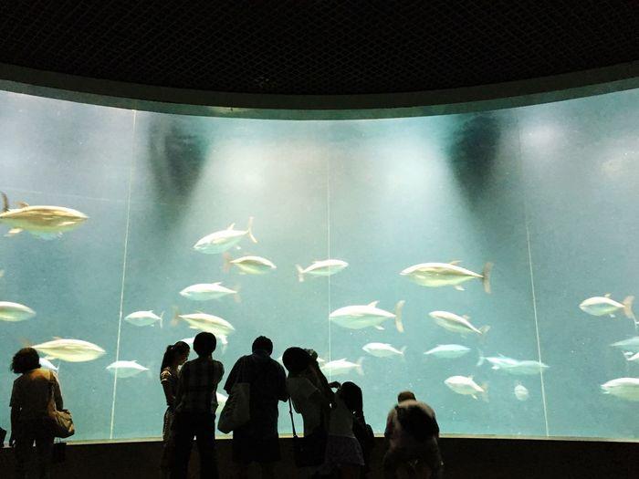 Tuna Tunafish Aquarium