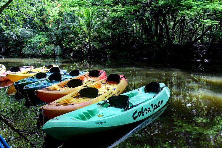 Kayak Kayac Water Nature Tree Day Outdoors Naturaleza Aventura Adventure Tropical Wood Travel Puerto Rico Humacao, PR Summer