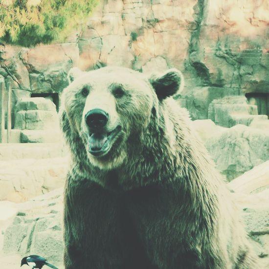 Senda Viva Bear Nature Park  Taking Photos