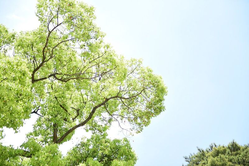 Trees Green Sky Blue Sky Sunny Day Japan Tokyo My Favorite