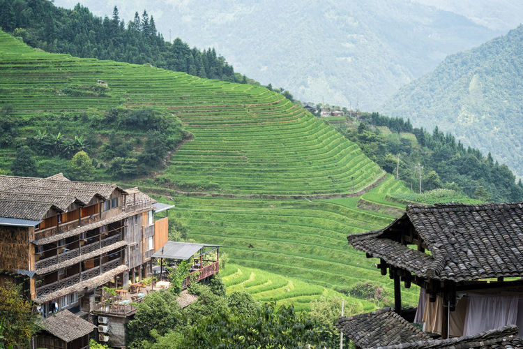Travel Photography Agriculture Beauty In Nature Building Exterior Built Structure Day Farmhouse Farming Field Green Color High Angle View House Hut Landscape Mountain Nature Outdoors Rice Paddy Rice Terraces Rural Scene Scenics Terraced Field Tourist Destination Travel Destinations