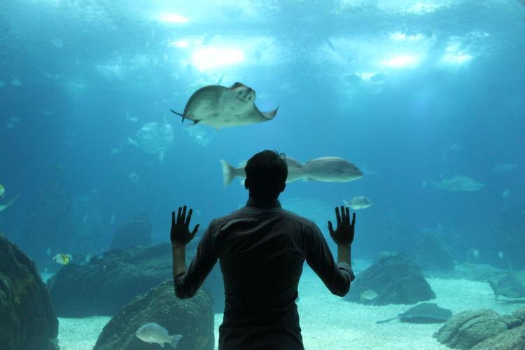 Rear View Of Man Looking At Fish Swimming In Aquarium
