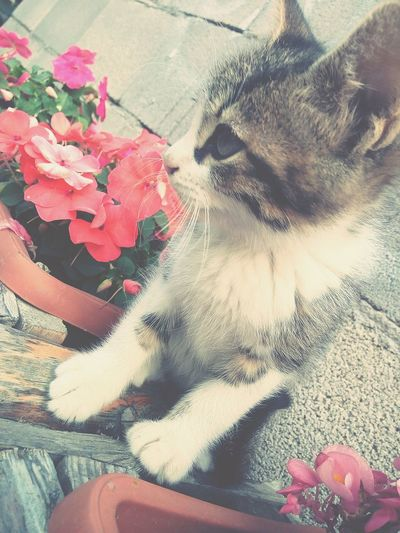 Cats 🐱 Flowers 🌸🌸🌸 Cute♡ First Eyeem Photo