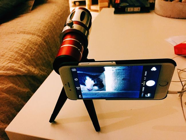 Project IPhone Lens Cannon WTF Cat Photography CAUGHT! Lazy Cat Super Tele