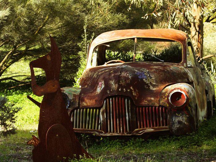 Holden cars and kangaroos Kangaroos Holden Cars Rusty Old Paddock Vintage
