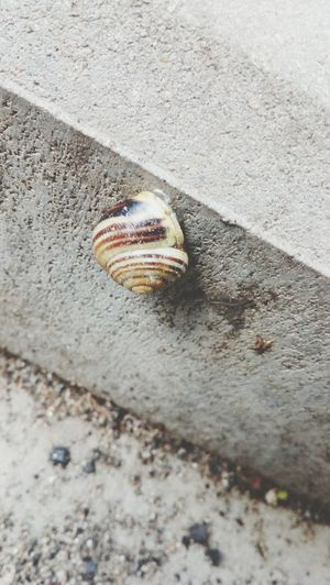 Snail One Animal No People Day Outdoors Close-up Nature