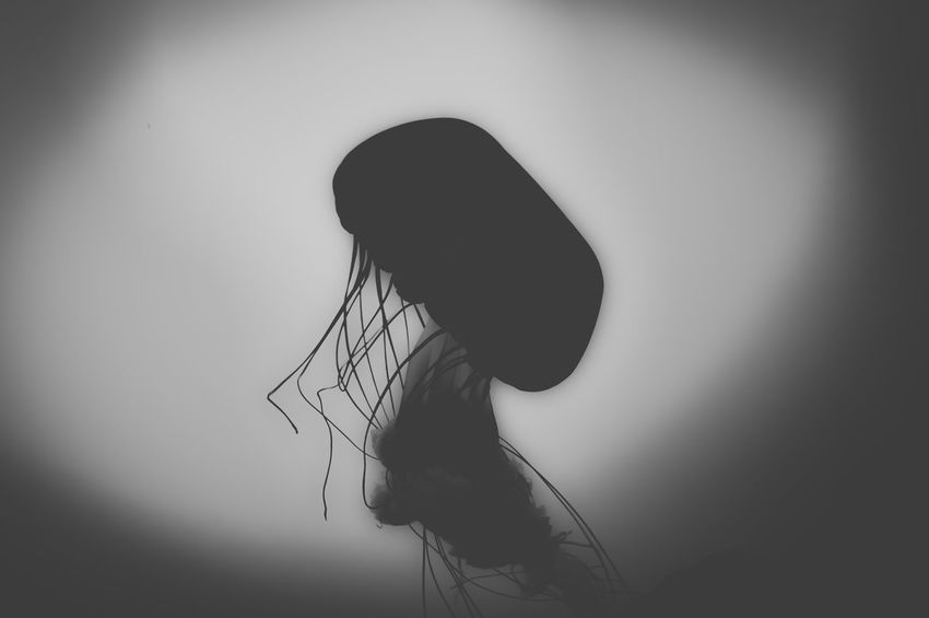 silhouette of a jelly fish Getty Images EyeEm Best Shots EyeEm Nature Lover EyeEm Selects EyeEm Gallery EyeEm EyeEmBestPics EyeEm Best Edits Photography B&w Blackandwhite Natural Beauty Jellyfish Aquarium Shadow Silhouette Young Women Blank Expression Character Alone Artistic