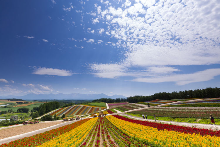 Scenic view of various flowers blooming on field against sky