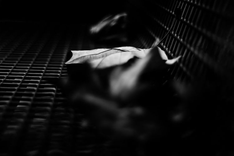 Silences that sound like winter. Silences that whisper when you walk. 50mm Autumn Autumn Leaves Bench Black & White Dark Light Natural Light Blackandwhite Blurry Close-up Leaf Light And Shadow No People Park Photography Selective Focus First Eyeem Photo