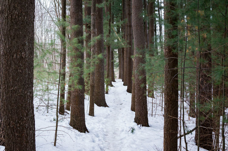 snowy path through the woods. Symmetry Snow Path Hiking Hikingadventures Exploring Adventure Peaceful Quiet Solitude Finding Your Way Trail Footprints Tree Snow Winter Cold Temperature Tree Trunk Nature Pine Tree Outdoors Forest Growth Beauty In Nature Landscape Day The Great Outdoors - 2018 EyeEm Awards