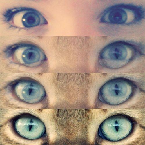 I always thought I was part Cat Eyes Enjoying Life Blue Eyes