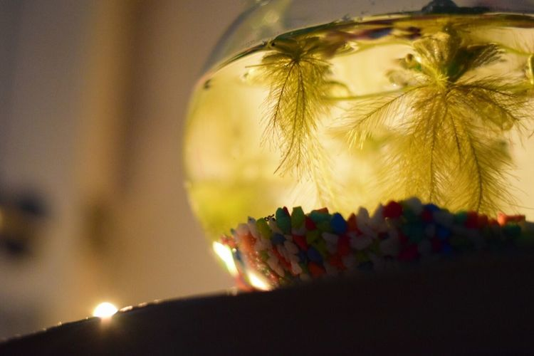 Low angle view of fishbowl on table