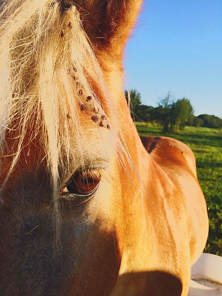 Nature! Look deep in the eyes. What's it saying? Horses Animal Themes Green Color Trees Trees And Sky Eye Horse Eye Stare