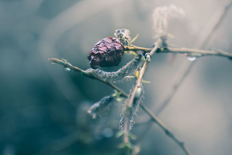 Animal Animal Themes Animal Wildlife Animals In The Wild Beauty In Nature Close-up Day Fragility Freshness Growth Insect Invertebrate Leaf Nature No People One Animal Outdoors Plant Plant Part Selective Focus