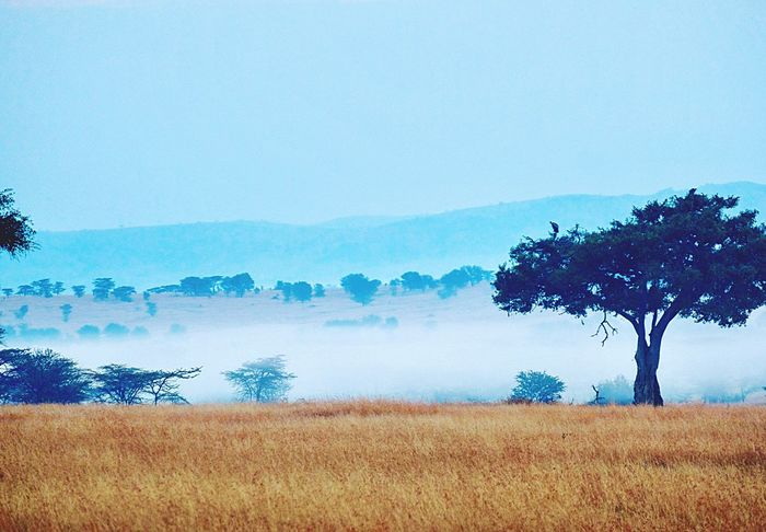 Landscape Nature Tree Field Tranquility Beauty In Nature Tranquil Scene Agriculture Scenics Growth No People Clear Sky Day Outdoors Rural Scene Sky Sand River Masai Mara Africa Safari 2017 Beauty In Nature Sunrise And Clouds Africa Kenya Massai Marra