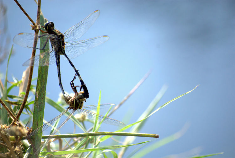Dragonflies Animal Themes Animal Wildlife Beauty In Nature Birds Photography Birds_collection Close-up Day Dragonflies Love In Nature No People Outdoors