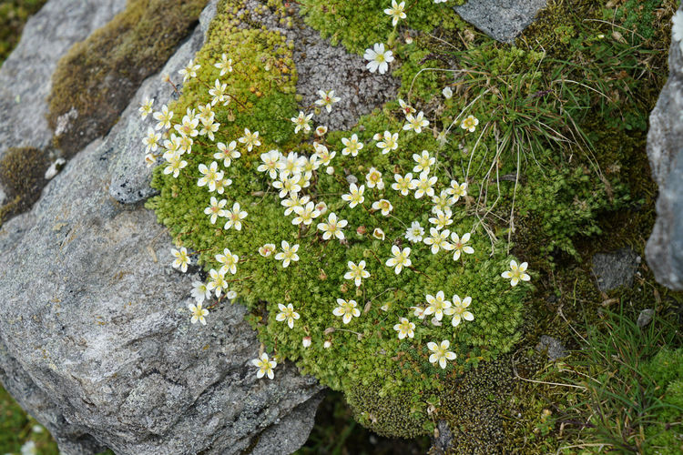 High angle view of flowering plant growing on rock