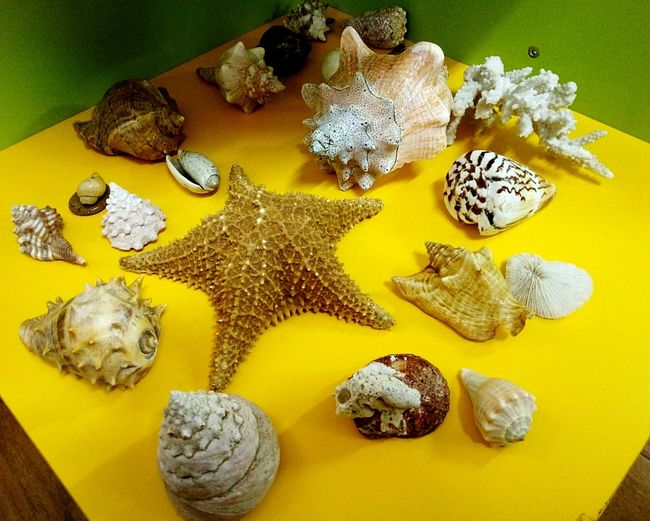 Nature No People Shells🐚 Yellow Fragility Close-up Indoors  Animal Themes Conch Sea Starfish