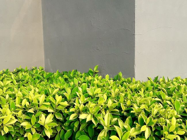 Brown Wall Wall Background Backgrounds Concrete Wall Background Green Leaves Green Plant Bed Brown Concrete Wall As Background Nature Backgrounds Plant Background Plant Bed
