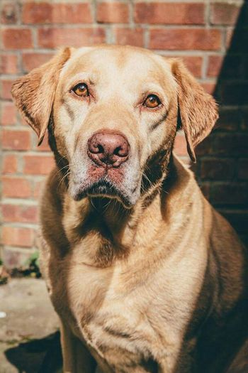 Domestic Animals Animal Themes Dog Pets Mammal One Animal Looking At Camera Portrait Close-up No People Day Outdoors