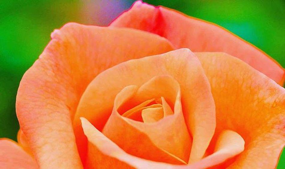 I am doing Orange and green =) 9VAGA_COLOROG9 2) SuperHubs_Max 3) Splendid_dof 4) Superb_flowers 5) Princely_shotz 6) IGSCFLOWERS 7) 9vaga_flowersart9 8) Flowersandmacro 9) Pocket_pretty 0) Loves_flowers_ 1) Rsa_nature 2) Pocket_allnature 3) Igglobalclubmacro 4) Tv_flowers 5) Fotofanatics_macro_ 6) Macro_vision 7) Great_captures_flowers 8) Awesome_florals 9) Ig_captures 0) Ig_shotz 1) Best_photogram 2) Ptk_macro 3) Macro_secrets 4) Nature_brilliance_flowers 5) Macro_holic 6) www_macro 7) jj_indetail 8) flowerstalking 9) nature_sultans 0) 500px