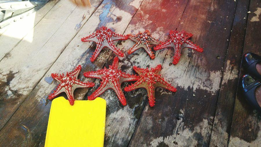 Starfish in Zanzibar See Life Nature Boat Starfish  Red Yellow Street Art Close-up