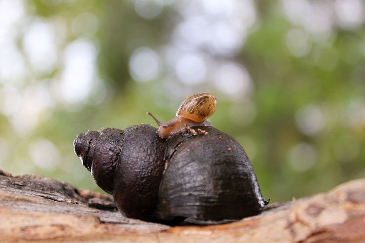 Close-up of snail on shell