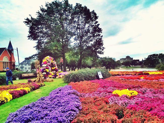 Flowerporn Snapseed Editing
