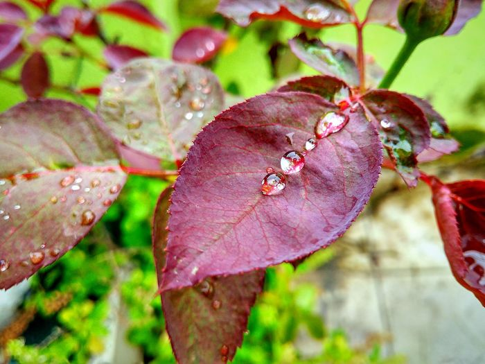 Freshness Outdoors Day Growth Plant Beauty In Nature Close-up Leaf Nature Macrophotgraphy Raindrops Monsoon