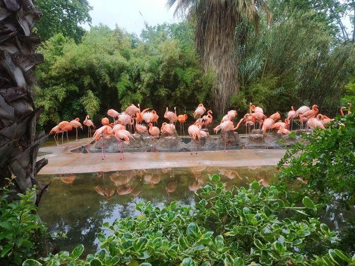 Zoo De Barcelona Barcelona Catalunya Catalonia Zoo Flamingo Bird Tree Water Lake Reflection Animal Themes Group Of Animals