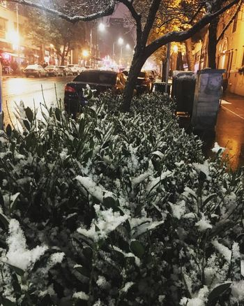 Winter Night Snow Outdoors Citylife Citystreets Nighttime Walks City Nature