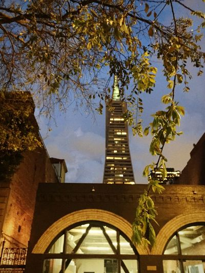 Through the trees.. Night Lights Trees Urban Landscape