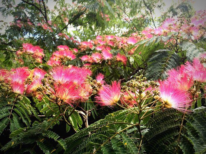 Eyemnaturelover Flowers Tree Fleurs Flowers, Nature And Beauty