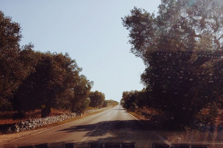 Road passing through forest