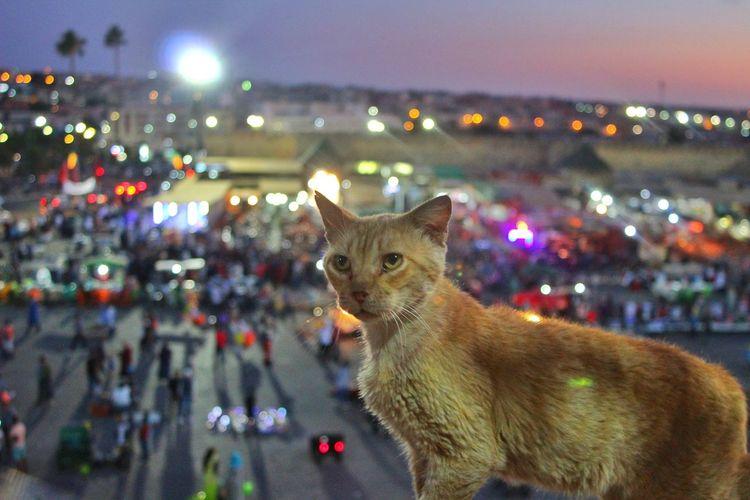 Cat looking away on illuminated city street