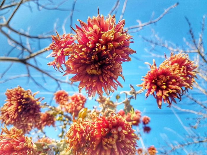 Nature Flower Beauty In Nature Close-up Flower Head No People Outdoors Sky Freshness Fragility Day