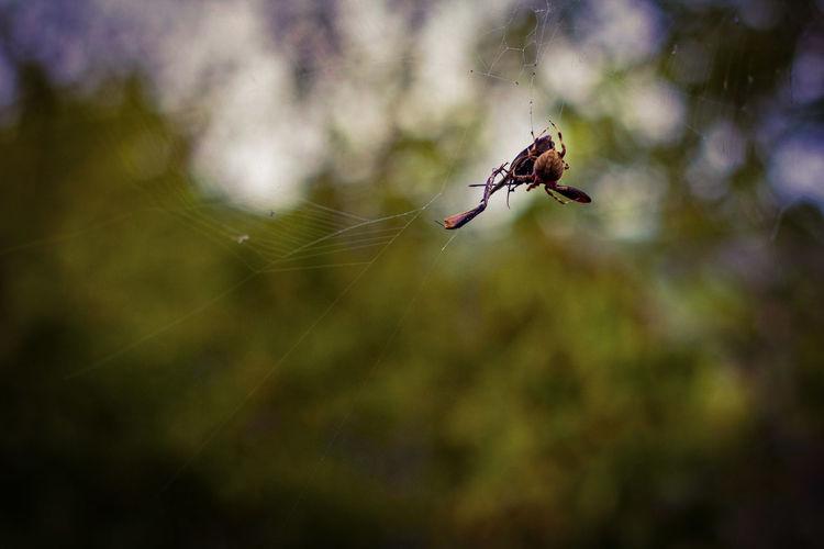Arachnid Arachni-therapy Close-up Food Hikingadventures Cedar Ridge Preserve Hiking Photography Passing Time Outdoors