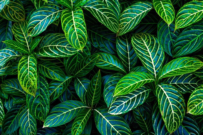 Green leaf background Green Color Plant Growth Leaf Plant Part Nature Full Frame No People Backgrounds Beauty In Nature Close-up