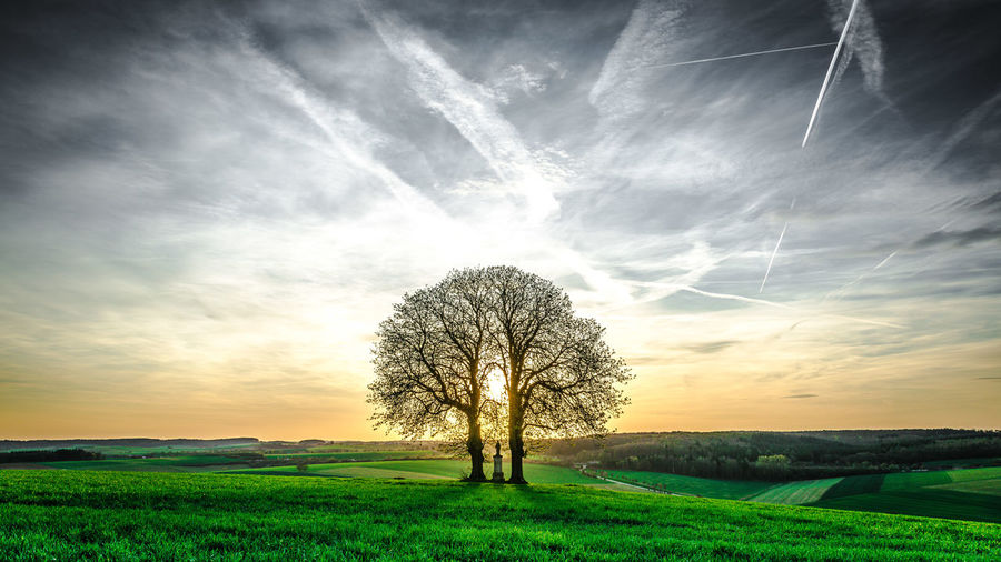 Two Chestnut Trees Bare Tree Beauty In Nature Cloud - Sky Field Land Landscape Nature Non-urban Scene Outdoors Plant Scenics - Nature Sky Tranquil Scene Tree