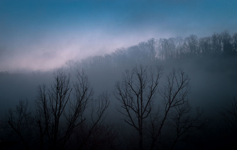 Bare Tree Beauty In Nature Cloud - Sky Environment Fog Forest Land Nature No People Outdoors Plant Scenics - Nature Silhouette Sky Spooky Tranquil Scene Tranquility Tree Winter