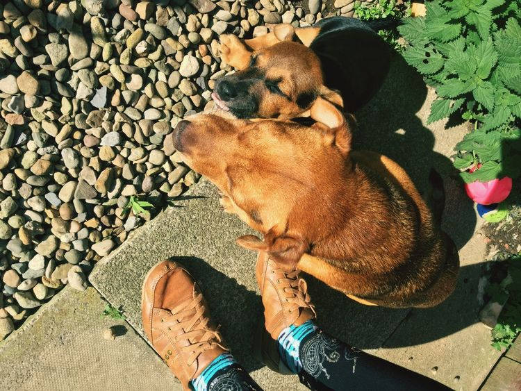 Domestic Animals One Animal Pets Dog Mammal Low Section Togetherness Pet Owner Men Leisure Activity Love Lifestyles Personal Perspective Person Pampered Pets Friendship Brown Field Holding Day