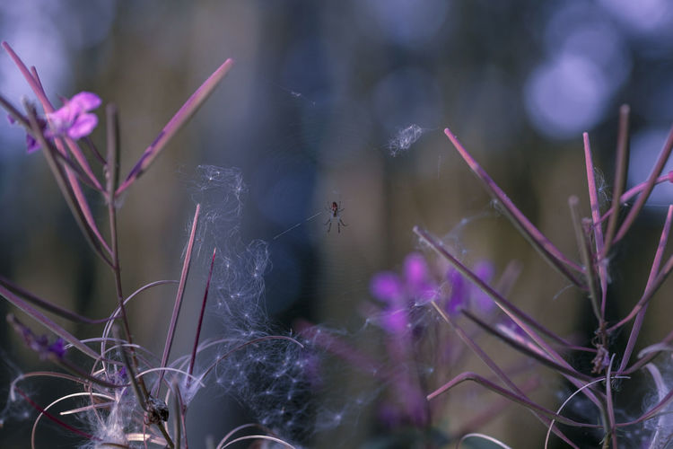 ©️935 spider.