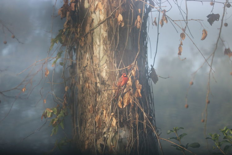 Beauty In Nature Bird On The Tree Foggy Weather Jacksonville Morning Nature Sunny Rays Tree