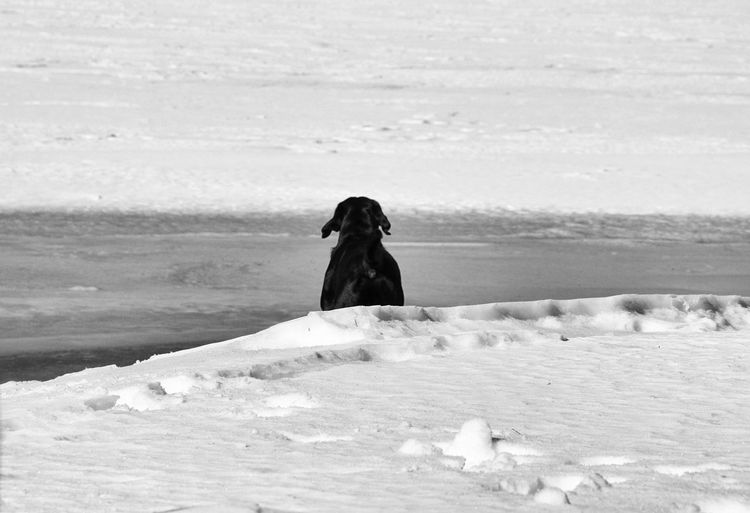 Dog on snowcapped field during winter