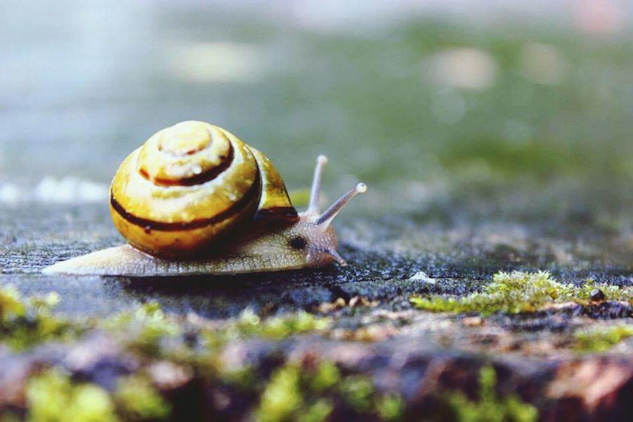 Snail Animals Nature Northern Ireland