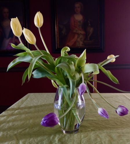 Tired tulips Plant Vase Flower Flowering Plant Indoors  No People Table Purple Home Interior Glass - Material Still Life